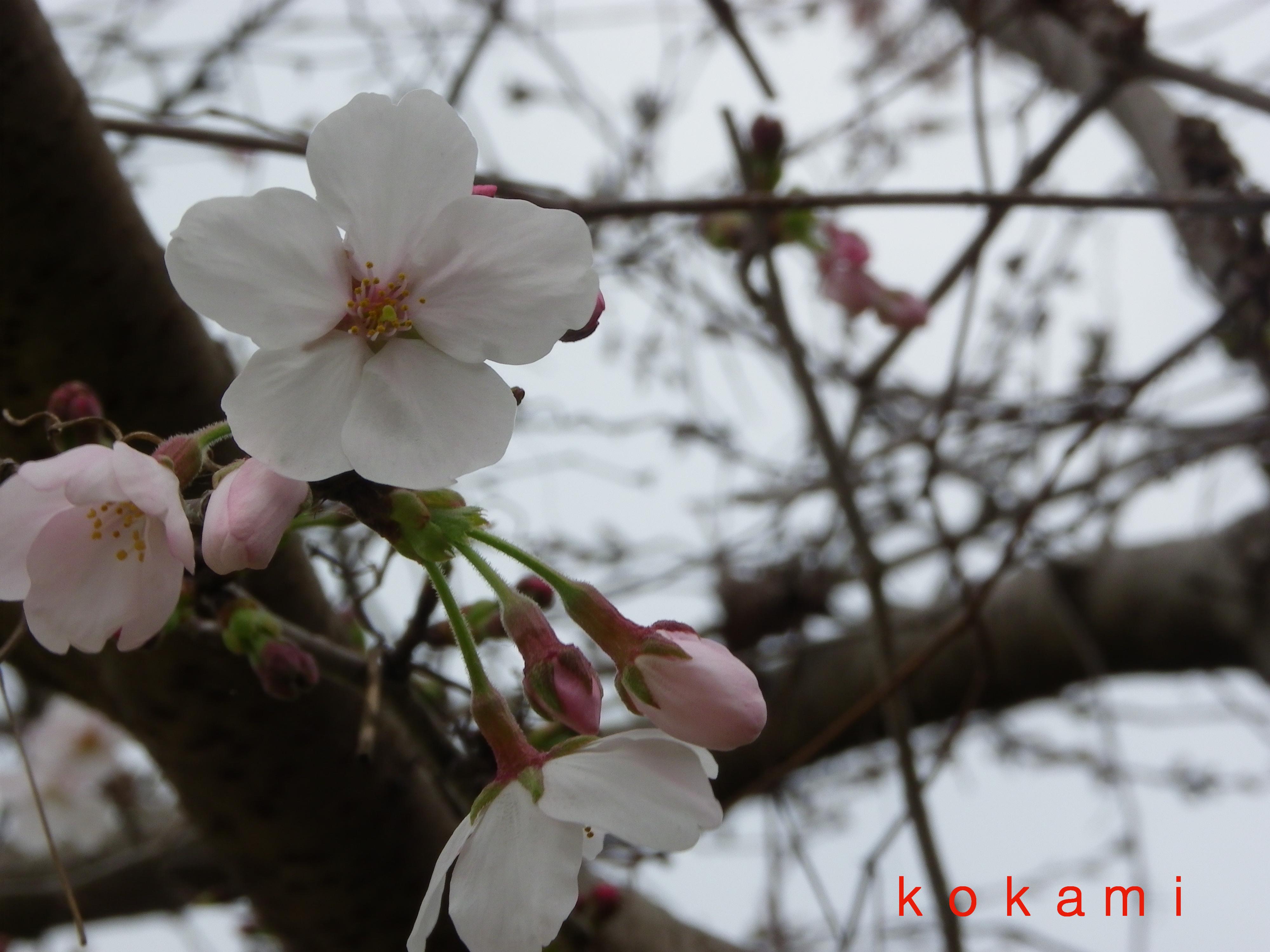 姫路城 夜桜 ライトアップ 時間
