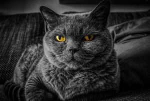 猫 引越し 高齢猫