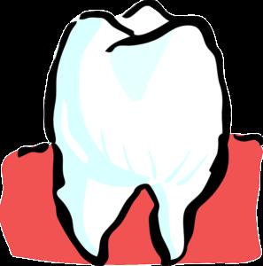 歯ぎしり 奥歯 神経 痛み