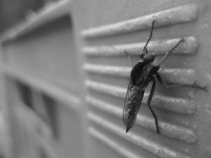 蚊 撃退 方法