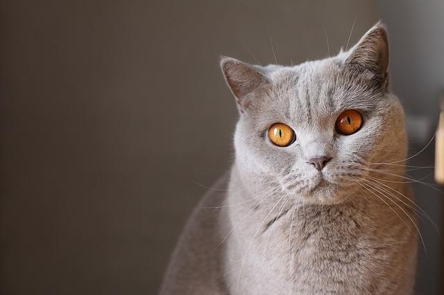 猫 捕まえ 方 洗濯 ネット