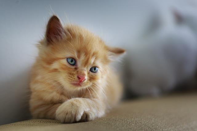 猫 飲み水 保温
